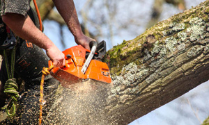 professional tree surgeons finchley north london