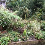 Garden clearance north finchley n12 london 1