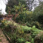 Garden clearance north finchley n12 london 2