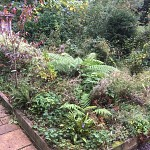 Garden clearance north finchley n12 london 7