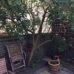 Gardening design services archway n19 london 3