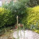 Gardening services kentish town nw5 north london 3
