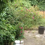 Gardening services kentish town nw5 north london 4