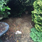 Gardening services muswell hill n10 london 03