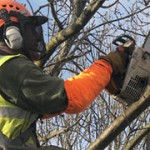 Tree surgery finchley north london