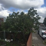 Tree surgery hendon nw4 north london 1