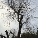 Tree surgery whetstone n20 london 1